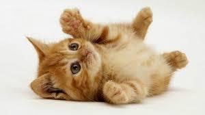 Kisah wanita masuk neraka karena kucing